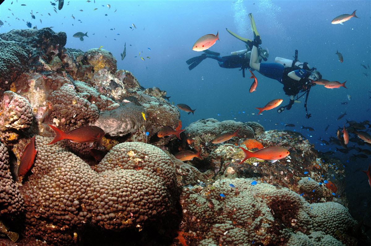 Scuba Diving Bazaruto Island Bazaruto Archipelago ...