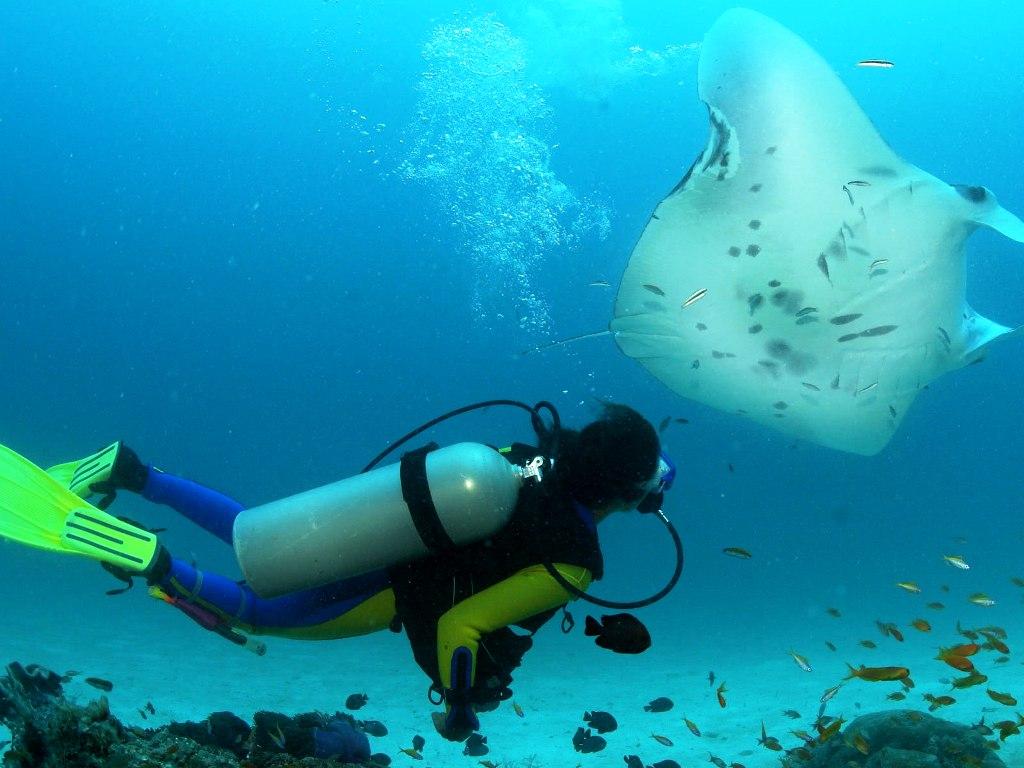 Scuba Diving Zanoni Shipwreck Ardrossan South Australia