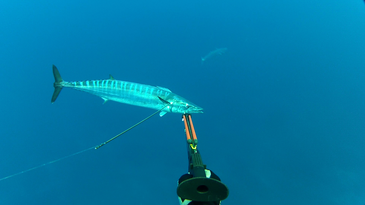 Spearfishing ardrossan barge yorke peninsula south for Night fishing spots near me