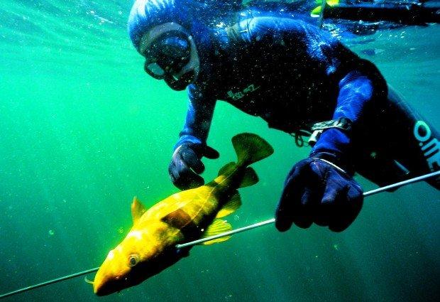 """""""Spearfishing Wedge Island"""""""