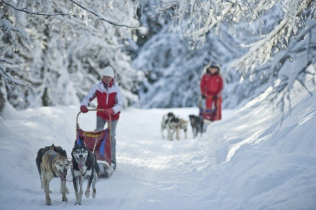 """Alto Adige, Trentino Dog Sledding"""