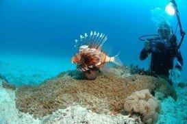 Chale Island, Mombasa Marine Park