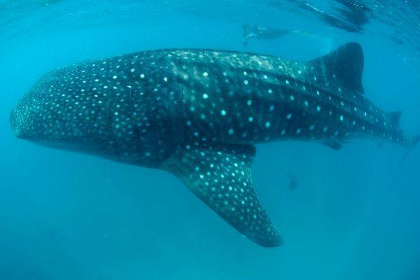 """""""Chale Island Scuba Diving"""""""