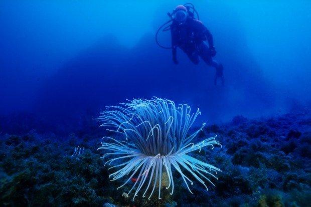 """Scuba Diving Mediterranean"""