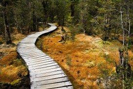 Milford Track, Te Anau