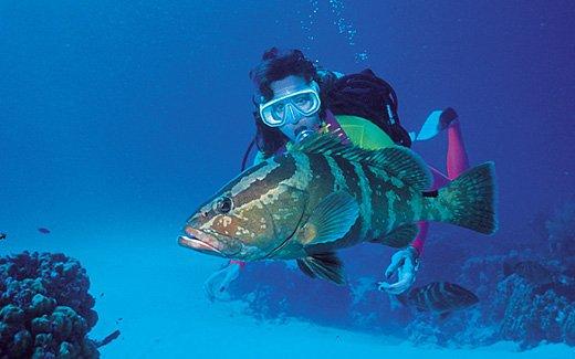 """San Salvador Scuba Diving"""