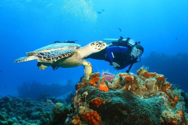 """""""Scuba Diving at Malindi Beach"""""""
