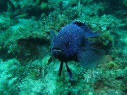 Seacliff Reef, Adelaide