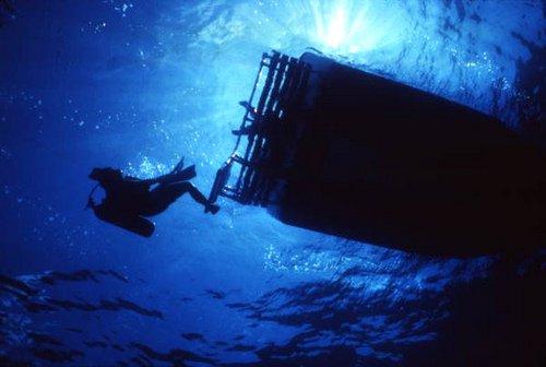 """Brain Coral, Mombasa Marine Park Scuba Diving"""