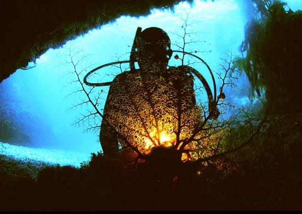 """""""Cape Town Scuba Diving"""""""