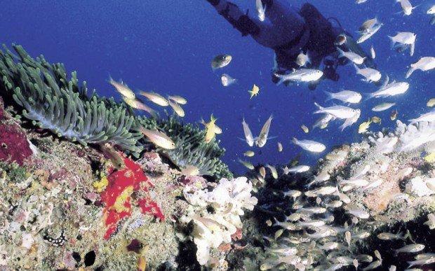 """""""Coral Garden, Mombasa Marine Park Scuba Diving"""""""