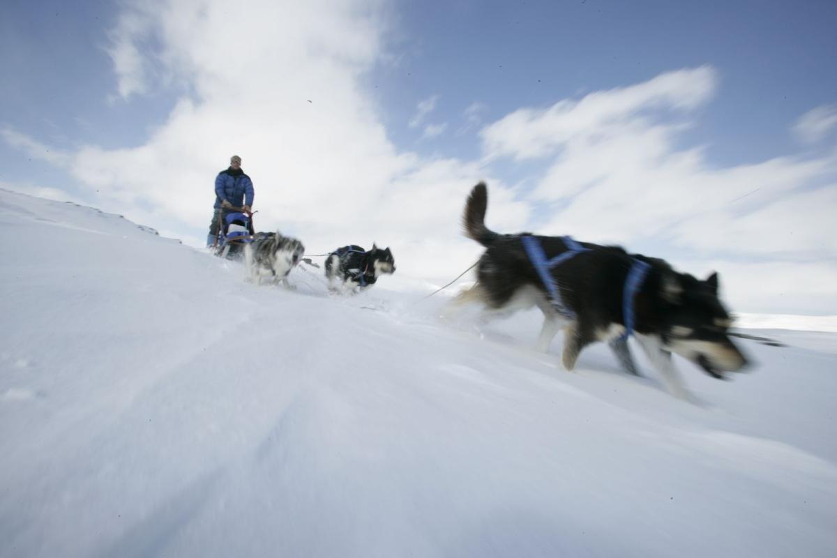 Wenatchee Dog Park