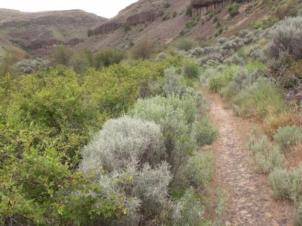 """Hiking Douglas Creek Canyon-Badger Mountain"""