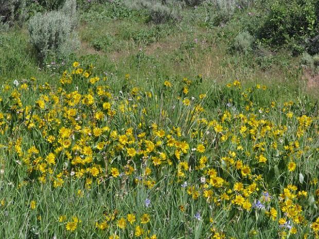 """""""Hiking Duffy Creek Trail"""""""