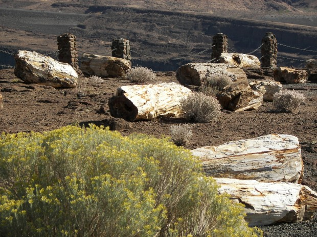 """""""Hiking Ginkgo Petrified Forest State Park Trail"""""""