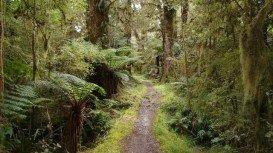 Hollyford Track, Te Anau