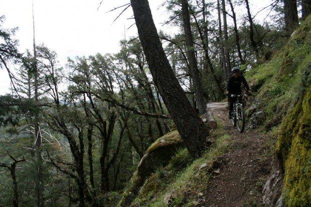 """Mount Shasta Mountain Biking"""