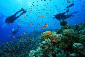Mushroom Coral, Mombasa Marine Park