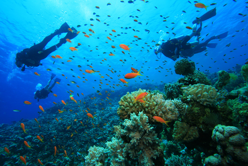 """Mushroom Coral Scuba Diving"""