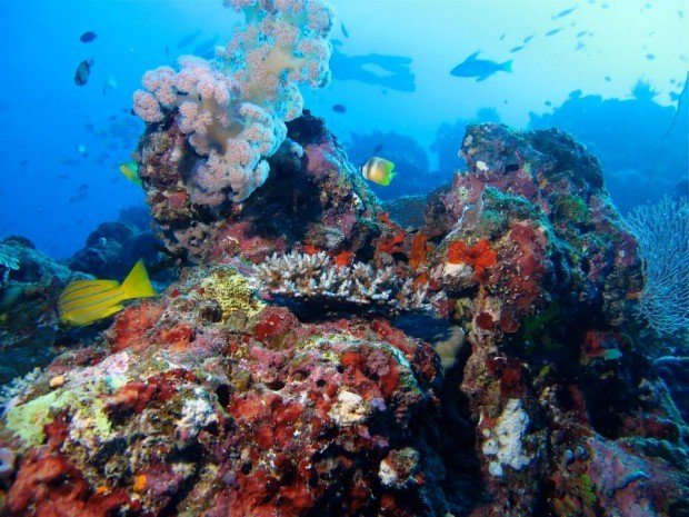 """""""Outer Blue Fish Reef, North Head Scuba Diving"""""""
