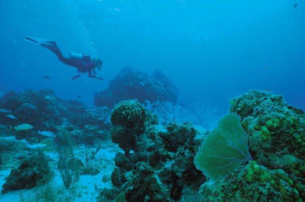 """Port Alfred Scuba Diving"""