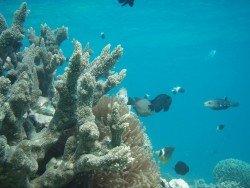 Sandy Ray, Mombasa Marine Park