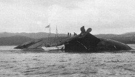 Monte Cervantes Shipwreck, Ushuaia