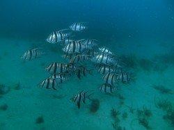 Milkies Reef, Adelaide