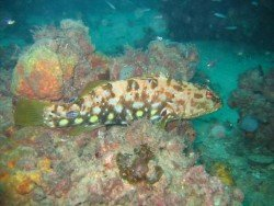 Northern Outer Reef, Adelaide