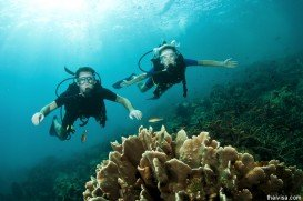 Sharkpoint Bouye 2, Mombasa Marine Park
