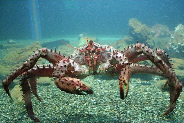 """Snorkeling Isla Mary Ann"""