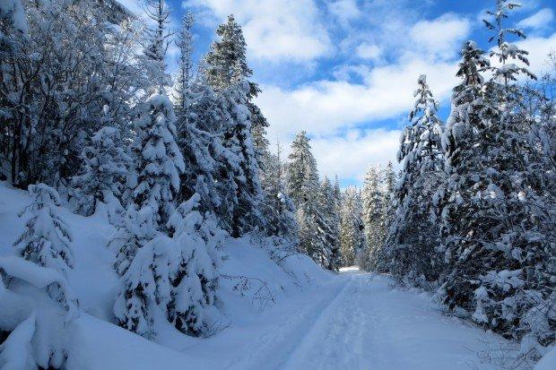 """""""Snowshoeing Wenatchee Crest Trail"""""""