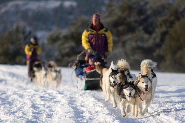 """Tamarack Lodge Dogs with Sled"""