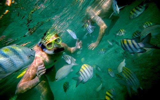 """Wasini Island, Shimoni Snorkelling"""