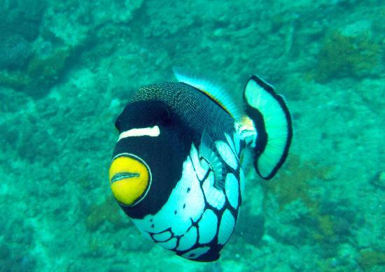 """Wreck Dania, Mombasa Marine Park Scuba Diving"""