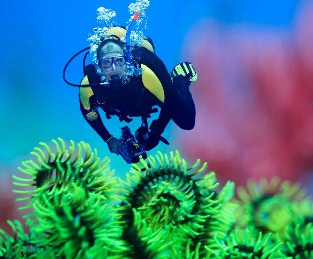 """""""Aberdeen Scuba Diving"""""""