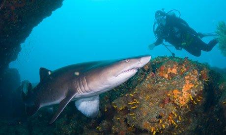 """Aliwal Shoal, Durban Scuba Diving"""
