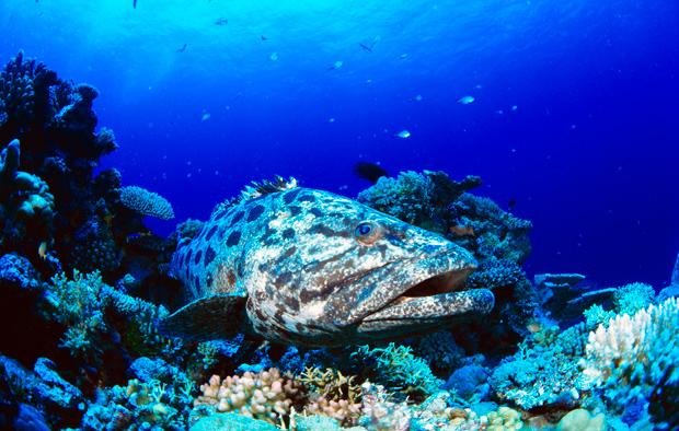 """Colours Reef, South Head Scuba Diving australia"""