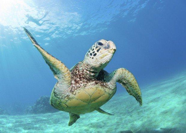 """""""Diving Mahukona Beach"""""""