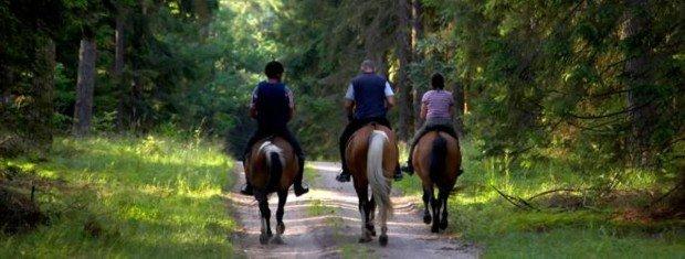 """Horseback Riding at Swansea'"