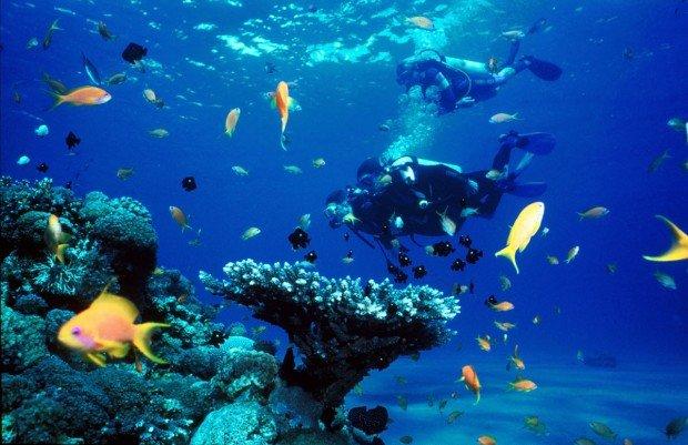 """Linene Reef Scuba Diving"""