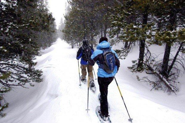 """""""Mont Sainte Anne Snowshoers"""""""