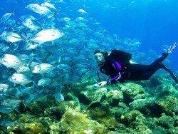 Baluba Reef, Bazaruto Archipelago