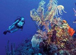 Atlantis Reef, Ponta Do Ouro
