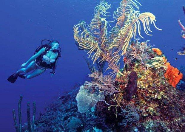"""""""Scuba Diving at Atlantis Reef"""""""