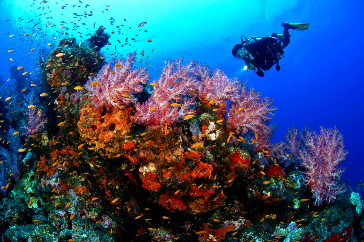 Scuba diving arvoredo island canasvieiras florianopolis - Padi dive sites ...