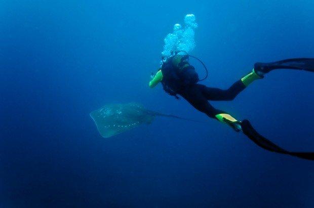 """Scuba Diving at Shallow Malongane Reef"""