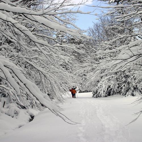 """""""Snowshoe snowshoeing"""""""
