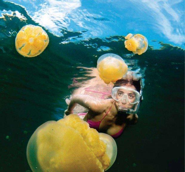 """""""Bare Island Scuba Diving"""""""