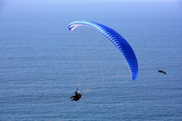 """Paragliding at Cooks Terrace"""